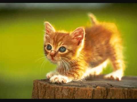 Mon Pt chat d'amour a moi...