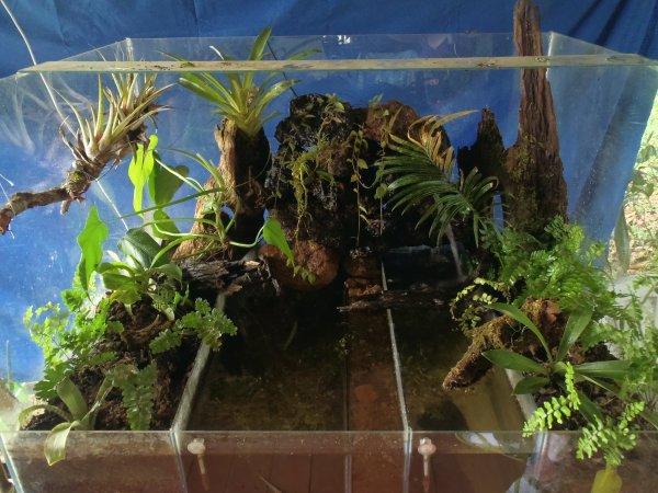 Mon terrarium !!!