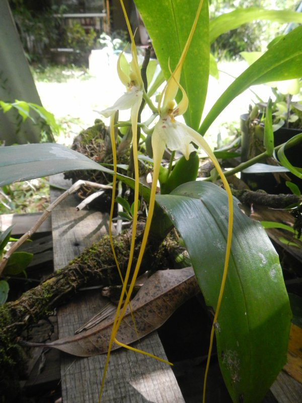 Partager l'intimité et la magie d'une orchidée...