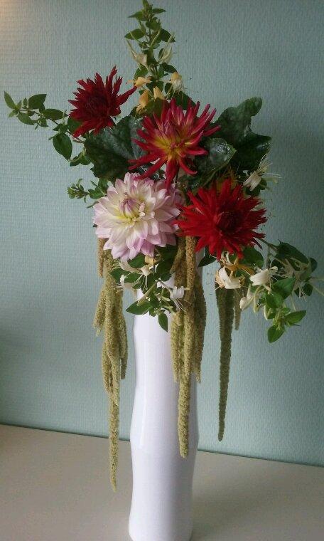 Profitons des fleurs d'automne.