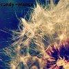 Photo de Candy-Moose