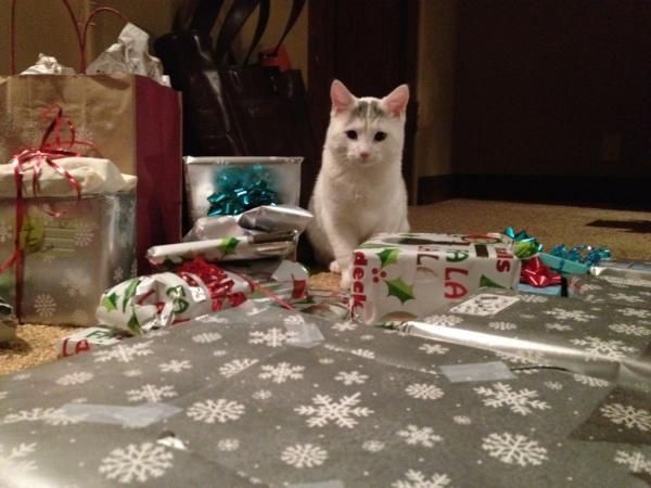 24/12/2011 Nina a twitter : Joyeux Noël Eve !!!! Emballage frénétiquement mes cadeaux de dernière minute avec mon petit assistant ....