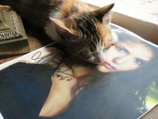 06/06/2012 La mère de Nina a twitter : Les chatons sont allés à de grandes maisons! Ceci est à quoi l'amour ressemble...