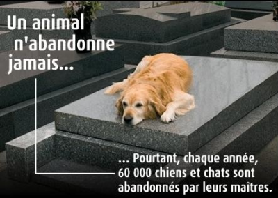 Contre l'abandon d'animaux (cette article fait mal au coeur et peux faire reflechir enfin jespere)