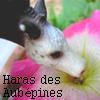 Le-Haras-des-Aubepines