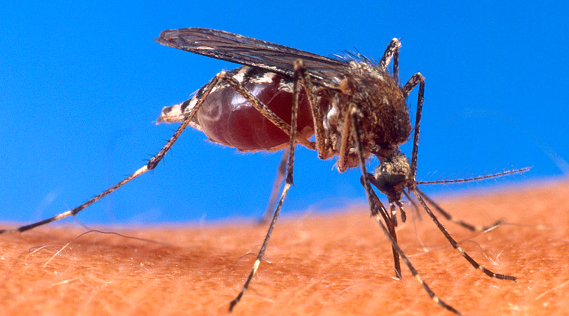 Divers _ _ Piqûre d'insecte