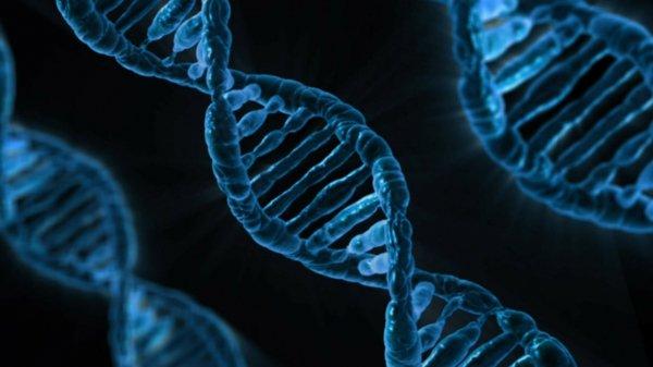 Où se trouve l'ADN dans notre corps ?