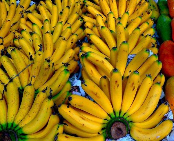 Mangez des bananes pour maigrir
