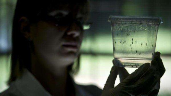 Neuf cas de virus Zika identifiés en Europe
