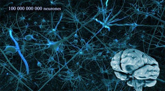 Et si on parlait un peu du cerveau  !