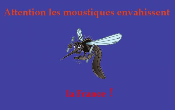 Les moustiques sont vraiment de sortie !