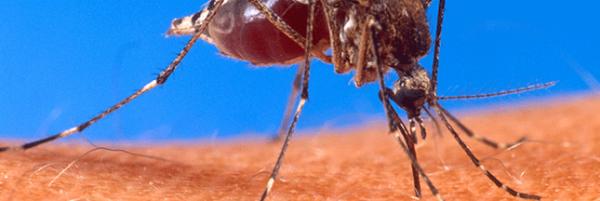 5 astuces naturelles contre les démangeaisons de piqûres de moustiques