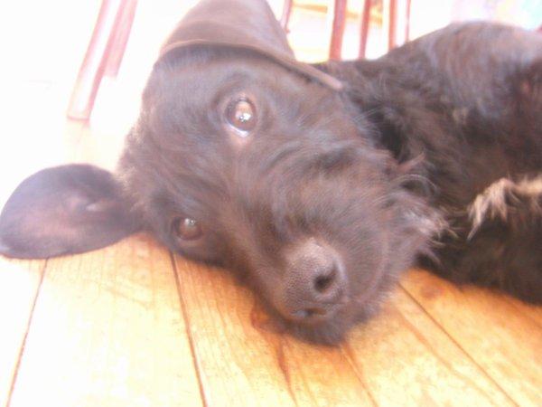 L'image du jour : Mon chien Pilou 14/04/13