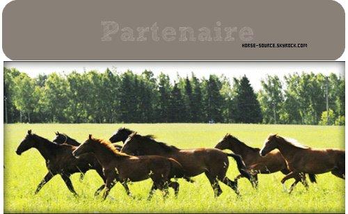 _ Sponsor & Partenaire  _