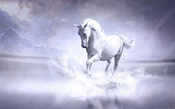 """"""" Le cheval est un cadeau de dieu à l'homme """""""