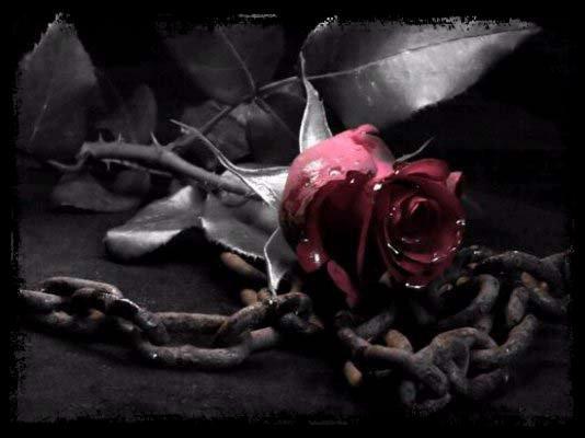 Destin de Rose