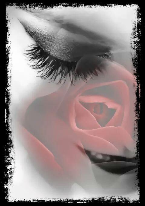 Et rester la rose de toujours