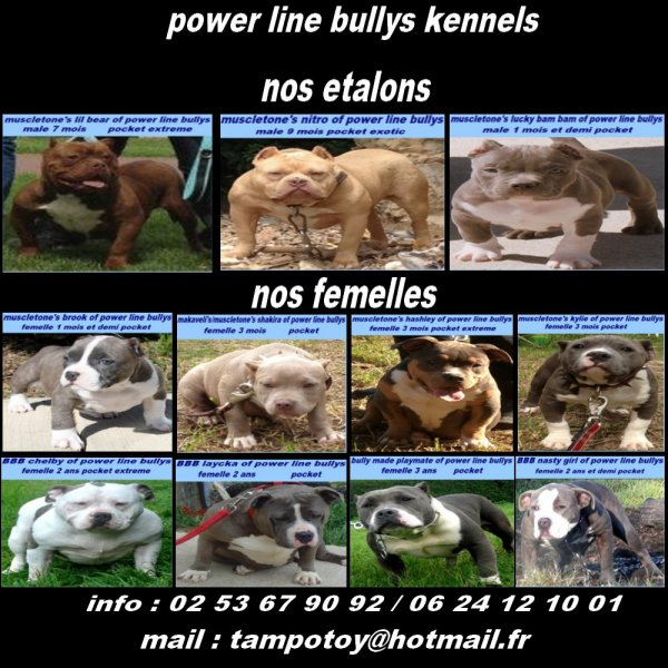 power line bullys kennel