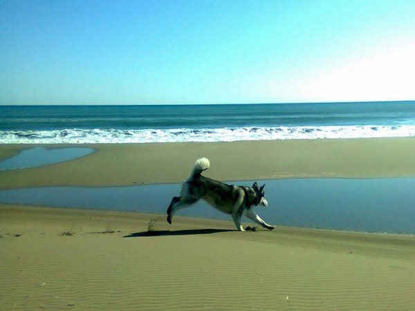 1 semaine de vacances à la mer avec ma Laska .