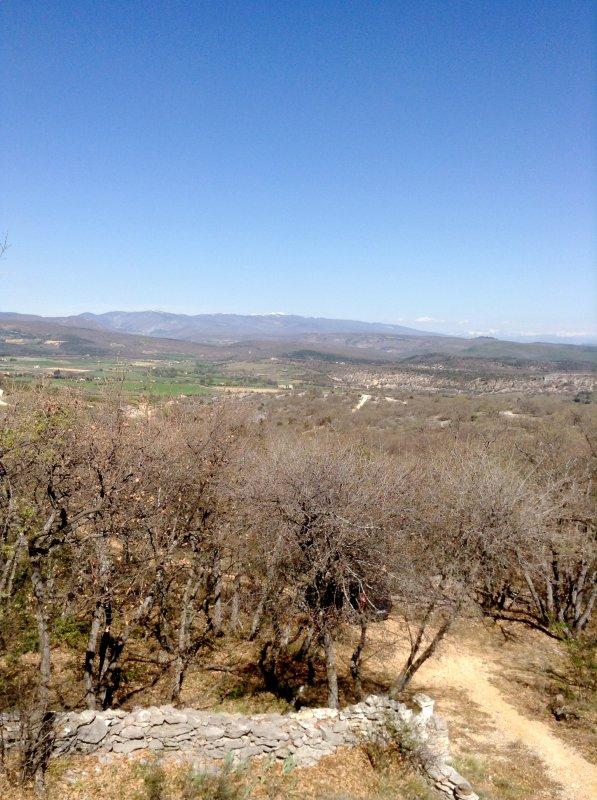 Coucou de Provence