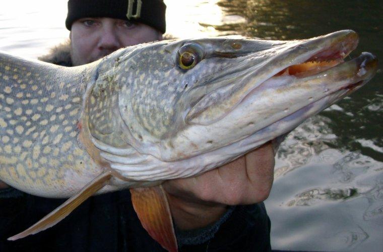 TOF TANZIL Guide de pêche ! MDR !!!