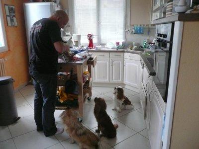 qui a dit qu'on est des chiens gourmands ?