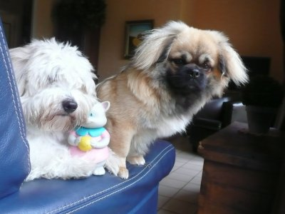 2 amis