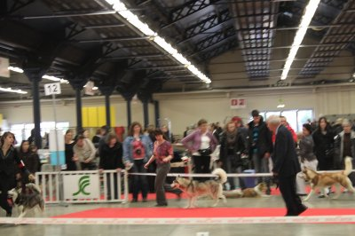 Paris Dog Show 2011 - diverses races