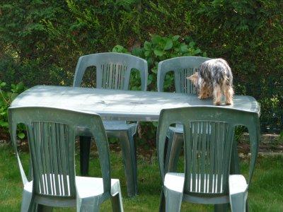 A peine la table débarrassée ...