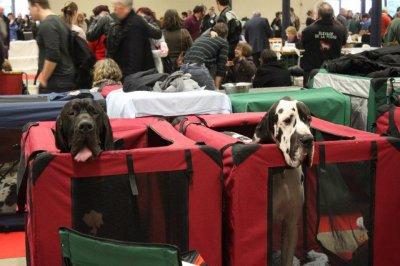 Paris Dog Show 2012