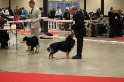 Paris Dog Show 2012 - Chien Finnois de Laponie