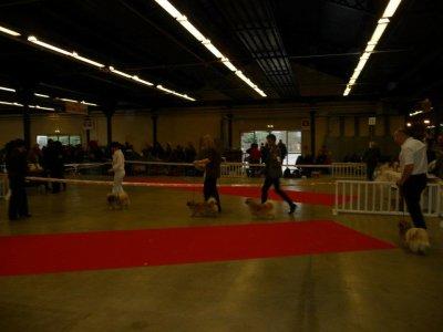 Paris Dog Show 2012 - Epagneul du Tibet