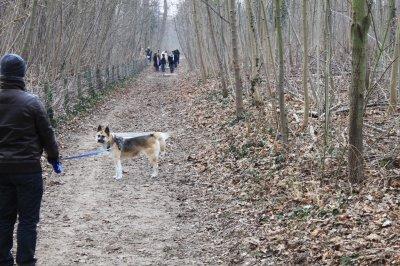 Ballade au bois de Vincennes - les akitas