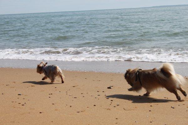 Les fous sont lâchés sur la plage