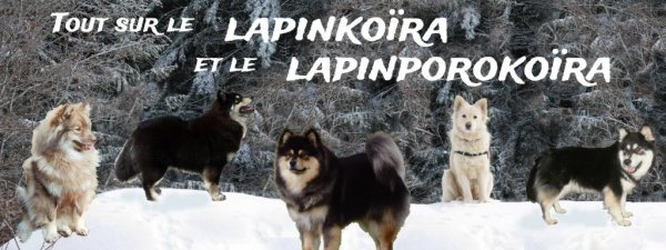 Forum Lapinkoïra et Lapinporokoïra
