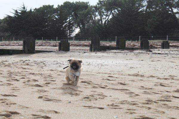Derniers jeux sur la plage