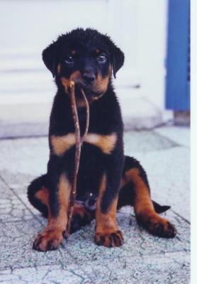 tro mimi ce petit chien la