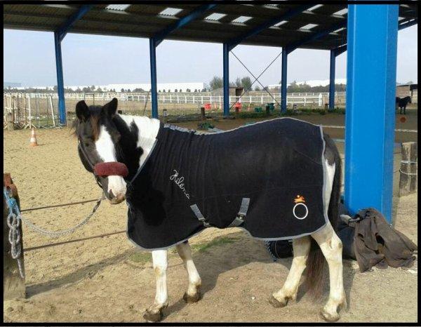 « Le cheval, comme chacun sait, est la part la plus importante de l'homme. »