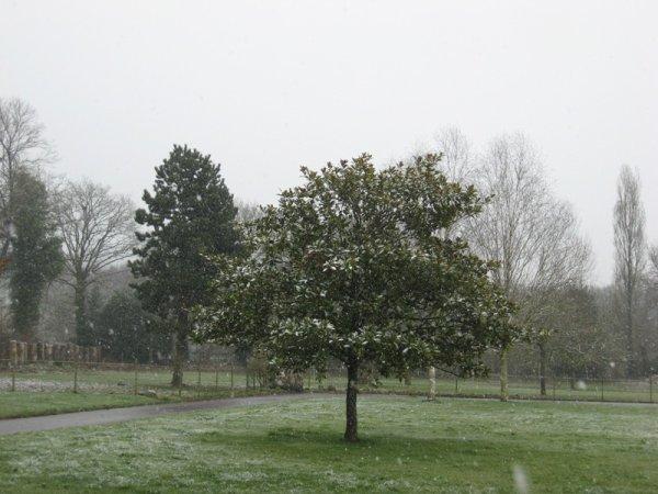 il parait que demain c'est le printemps !!!!!!