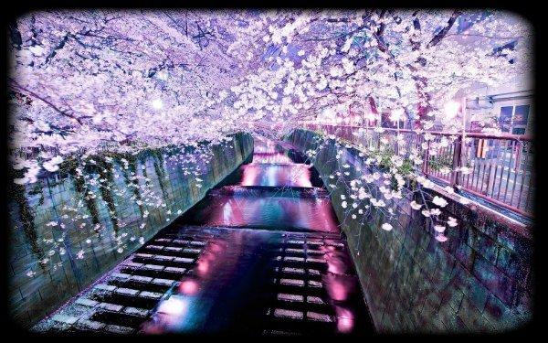 """"""" Un arbre qui tombe fait plus de bruit que mille arbres qui poussent. """" citation japonaise."""