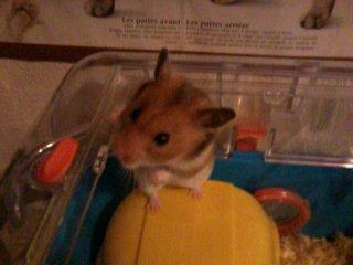 Mon Hamster ^^