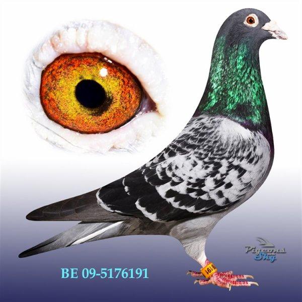 le barcelone 12 eme as pigeons sur barcelone