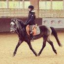 Photo de Love-horses-jablines