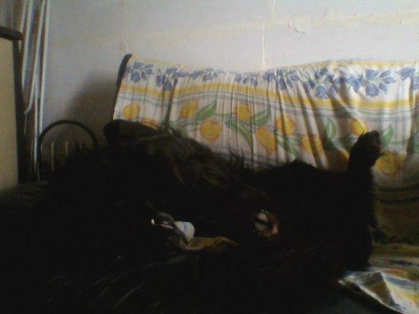quand mon chien dort ca donne ca . on dirait un cadavre enpailler. mdr