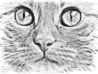 Le film Ma vie de chat a de quoi plaire aux enfants !