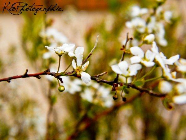 ►  Fleurs.  ◄