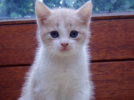 Mon chaton ♥ ♥
