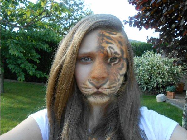Montage tête de tigre.