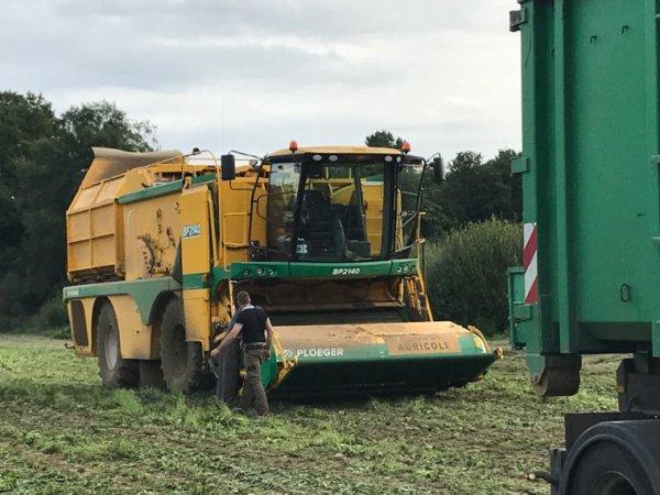 Récolte d'haricots 2017