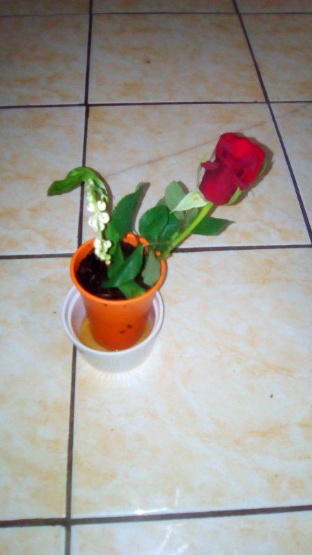Heureuse mon chéri est adorable pour le pot de muguet et Rose